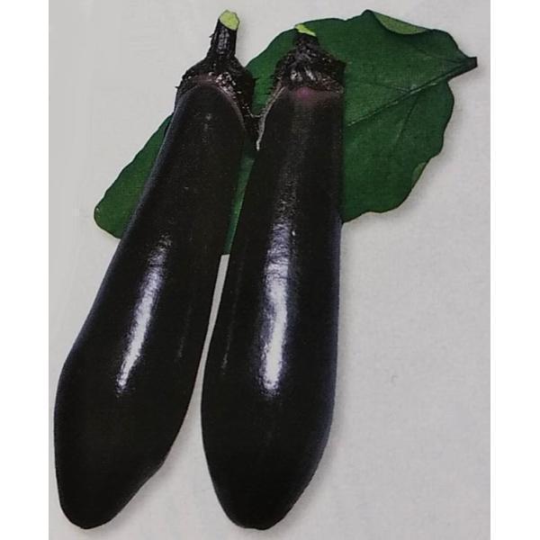 ナス種 黒陽 (70粒) [栽培用 種子 なす 茄子]