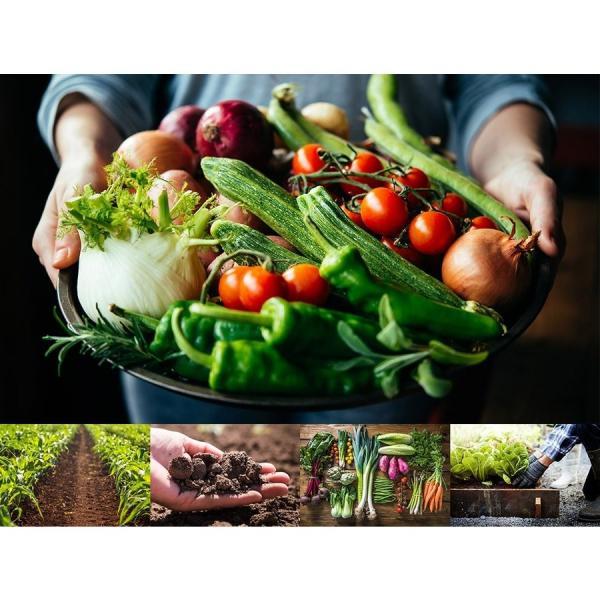 酵素サプリメント みやびの植物酵素サプリ100 3袋セット|miyabi-store|02