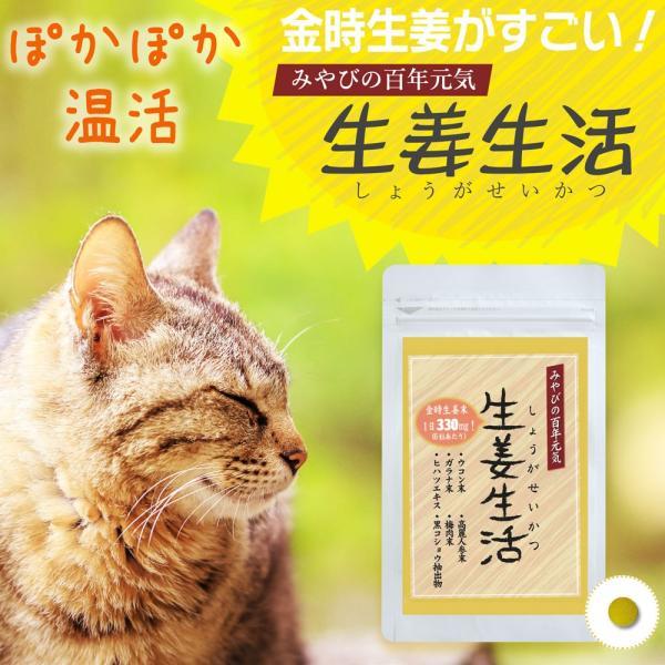 金時しょうがサプリ 生姜生活 メール便なら送料324円|miyabi-store|02