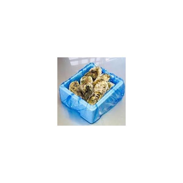 殻付きカキ 殻付牡蠣 カキ 業務用 生鮮 加熱用 宮城県産 三陸産 1000K入り|mjcr1yxgb