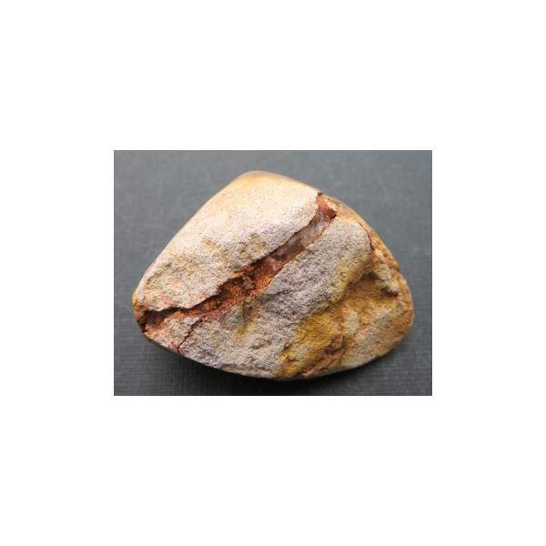 12245 オパール蛋白石 化した二枚貝 南オーストラリア産 : 瑞浪鉱物展示館 【送料無料】