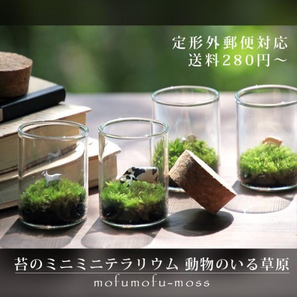 苔テラリウム 動物のいる草原 植物 母の日 ギフト プレゼント レビューでおまけ 定形外OK mofumofumoss