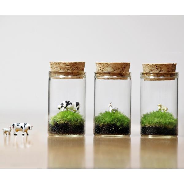 苔テラリウム 動物のいる草原 植物 母の日 ギフト プレゼント レビューでおまけ 定形外OK mofumofumoss 03