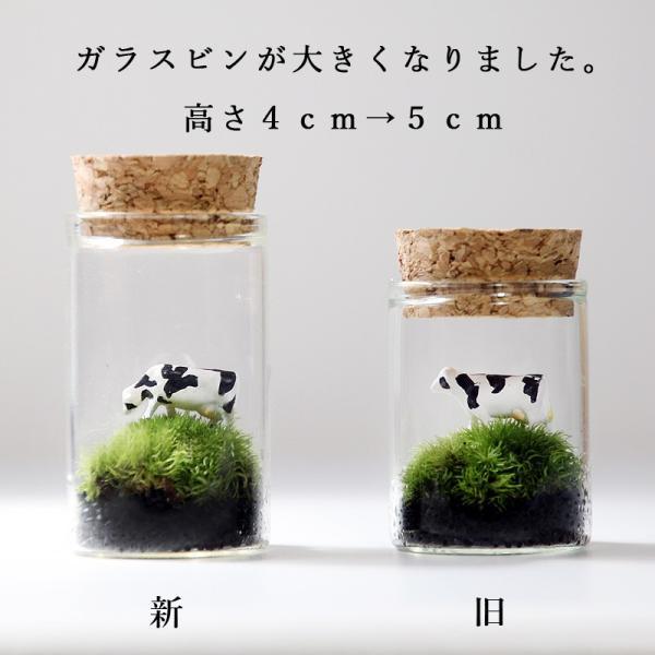 苔テラリウム 動物のいる草原 植物 母の日 ギフト プレゼント レビューでおまけ 定形外OK mofumofumoss 04