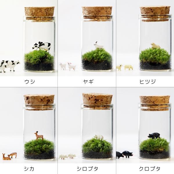 苔テラリウム 動物のいる草原 植物 母の日 ギフト プレゼント レビューでおまけ 定形外OK mofumofumoss 05