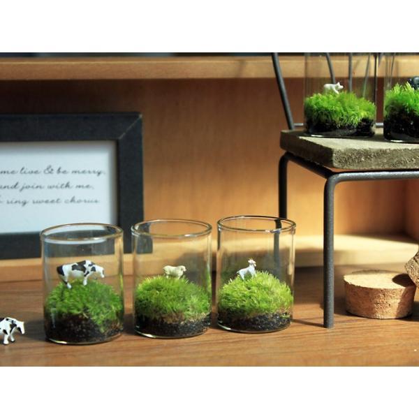 苔テラリウム 動物のいる草原 植物 母の日 ギフト プレゼント レビューでおまけ 定形外OK mofumofumoss 06