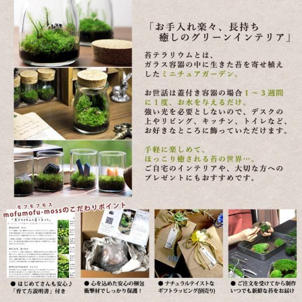 苔テラリウム 動物のいる草原 植物 母の日 ギフト プレゼント レビューでおまけ 定形外OK mofumofumoss 07