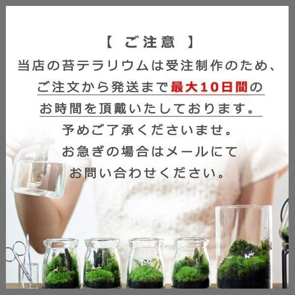 苔テラリウム 動物のいる草原 植物 母の日 ギフト プレゼント レビューでおまけ 定形外OK mofumofumoss 08