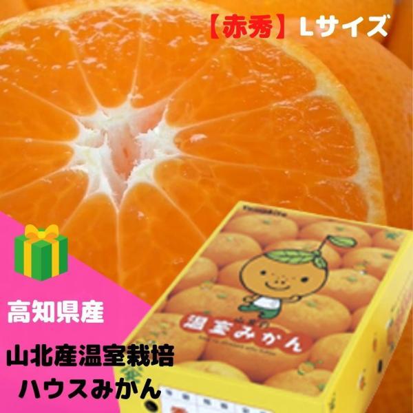 みかん 山北産温室栽培ハウスみかん【赤秀】L(約2.5kg) 高知県 甘さ抜群!