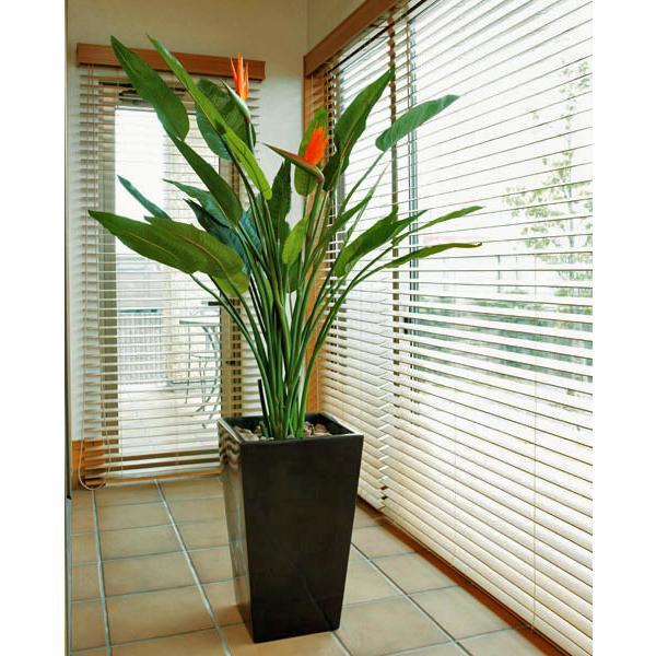RoomClip商品情報 - 光触媒 観葉植物(人工観葉植物)光の楽園 アートストレチア花付 1.6m
