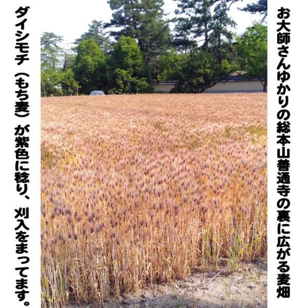 うどん県のダイシモチ(讃岐もち麦)10キロ大袋 (モチモチ美味しくて食物繊維がたっぷりです) morie 02