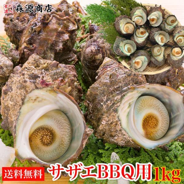 サザエ さざえ バーベキュー BBQ 1kg 8〜13個  海鮮 魚介 中サイズ ツボ焼き用 送料無料 同梱不可 冷蔵配送  stp