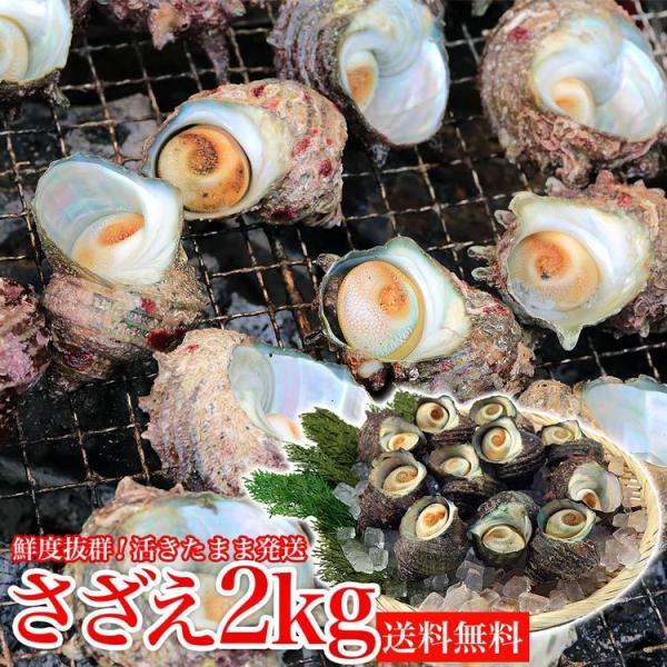 サザエ さざえ バーベキュー BBQ 2kg 16〜26個  海鮮 魚介 中サイズ ツボ焼き用 送料無料 同梱不可 冷蔵配送  stp