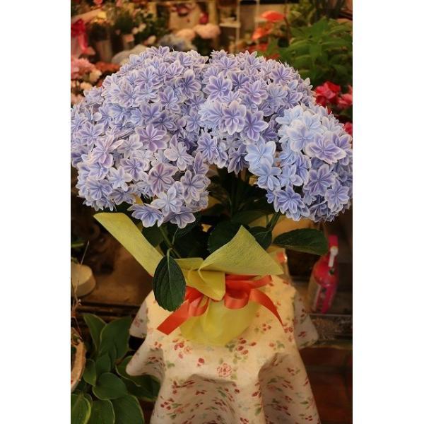 19・アジサイ 万華鏡ブルー5号鉢 morinouen-store