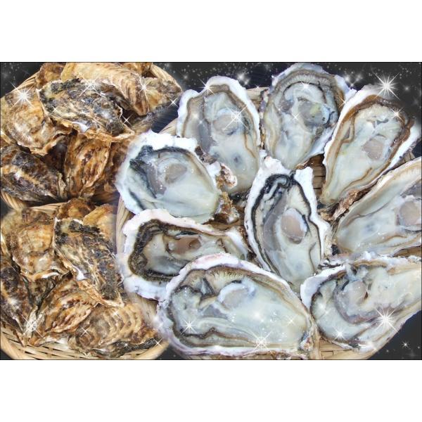 一粒牡蠣 (かき)大 豊前海産カキ 3kg