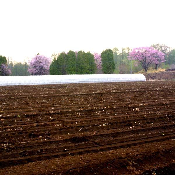 北海道産 無農薬 グリーンアスパラ 1kg 農園直送|mutumiya-web|03