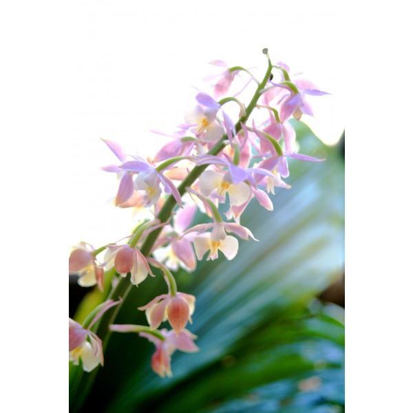 マイケア公式 薬用育毛剤 花蘭咲 からんさ カランサ 120ml|mycare|02