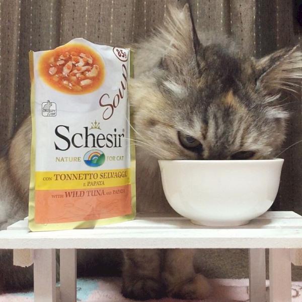 NEW 最短賞味2021.12・シシア 猫 スープ(ツナ&パパイヤ)85g scc675|nachu|03