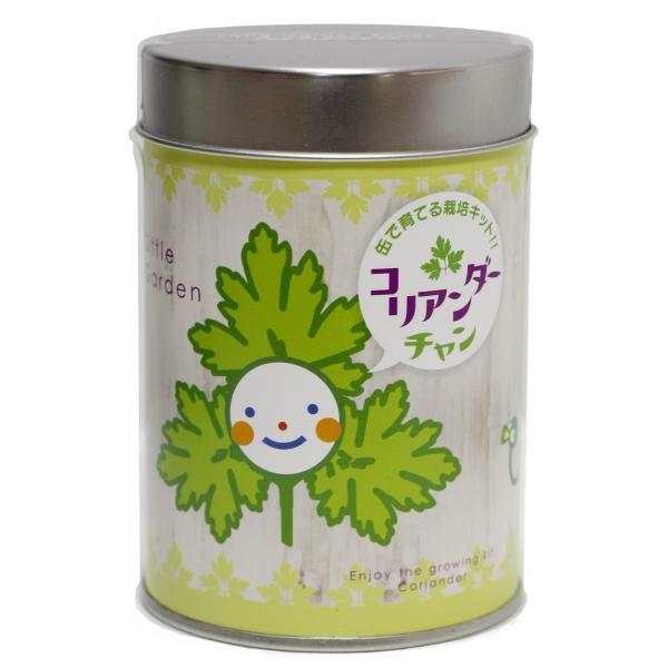 MTリトルガーデン コリアンダーちゃん(パクチー)|nagakura-store|02