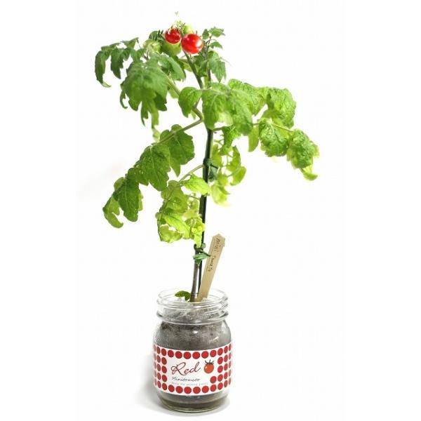 ガーデン・ジャー ミニトマト赤|nagakura-store|06
