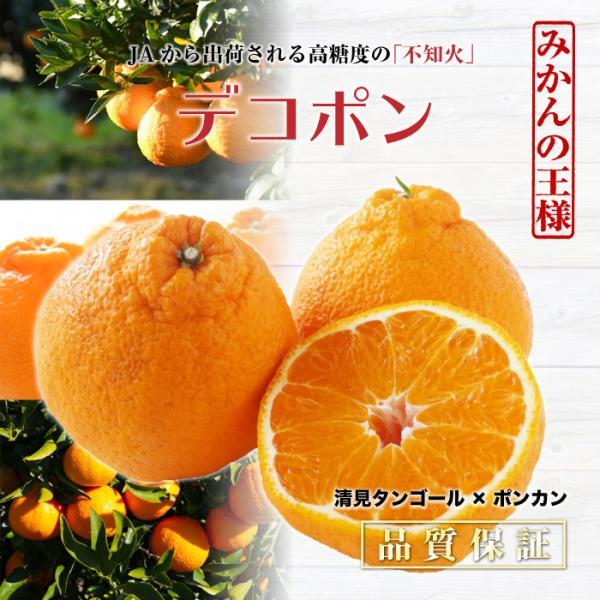 デコポン 5キロ 愛媛県産 佐賀県産 熊本県産 2Lサイズ 最上級品!|nagashimastore7|02