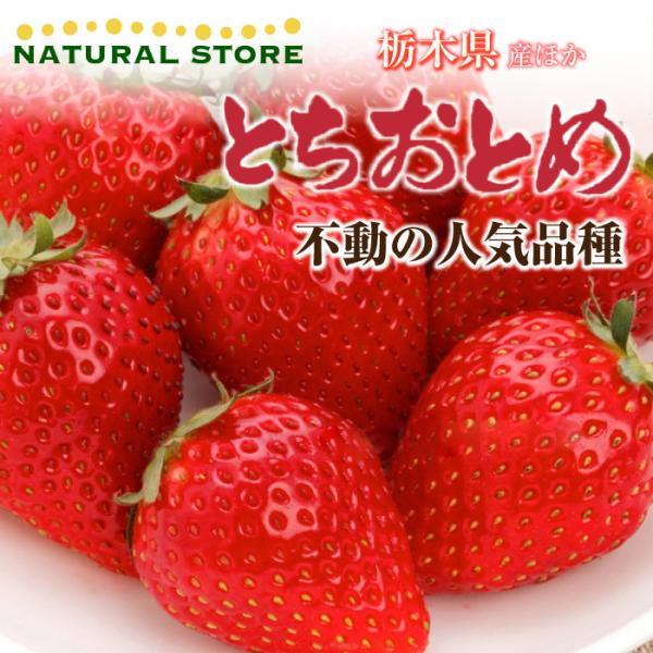 [予約 2022年1月頃より発送] 【要冷蔵】いちご とちおとめ 3Lサイズ大粒 300g×2パック化粧箱 栃木県産    ギフト ご贈答用
