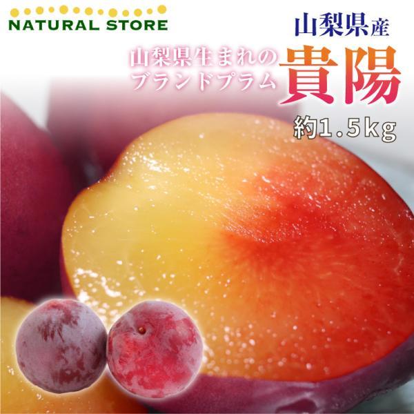 山梨県産 高級プラム 貴陽 約1.5kg すもも スモモ ギフト 高級フルーツ 果物 お中元 ご贈答 [予約 7月15日からの発送]