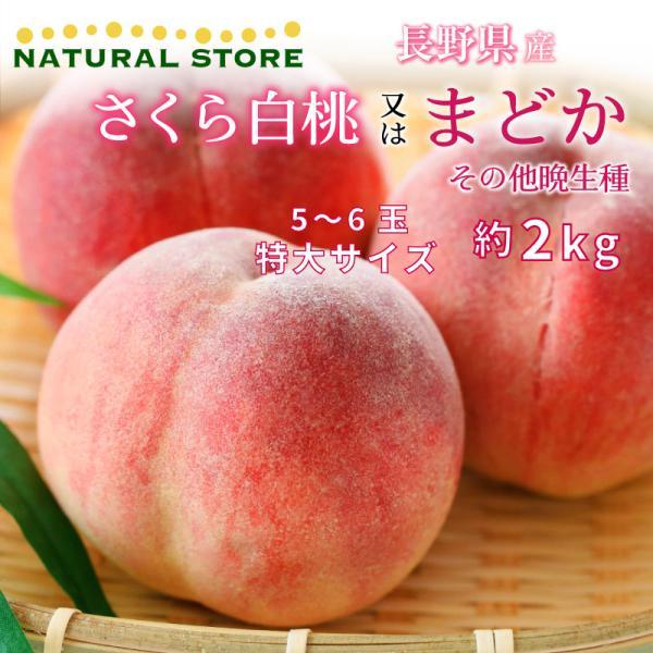 さくら白桃 まどか その他晩生種 長野の桃 もも 桃 約2kg 5〜6玉 特大サイズ 長野県産 最良品の桃をお届け 白桃 ギフト 通販 [予約 8月10日〜31日の納品]