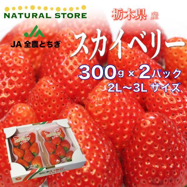 [予約 2022年1月頃より発送] 【要冷蔵】スカイベリー 2パック 2L 3Lサイズ 約300g×2パック 栃木県産 苺 いちご イチゴ すかいべりー ブランドいちご
