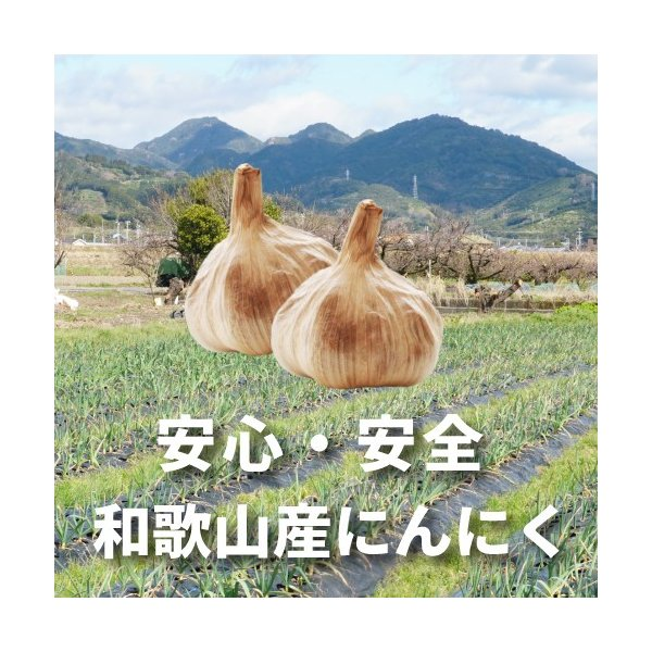 和歌山の農家が育てた紀州・国産にんにく