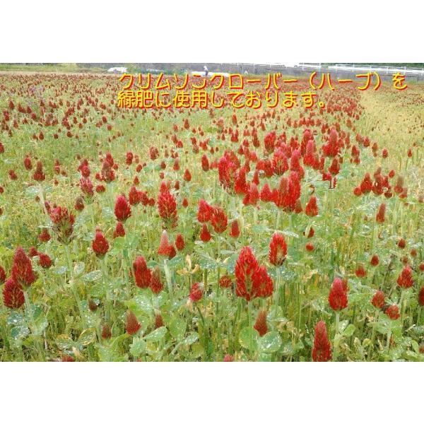 【低温熟成】平成30年度産 鳥取県産 ハーブ米 ミルキークイーン 精米5kg|nakazaki-farm|02