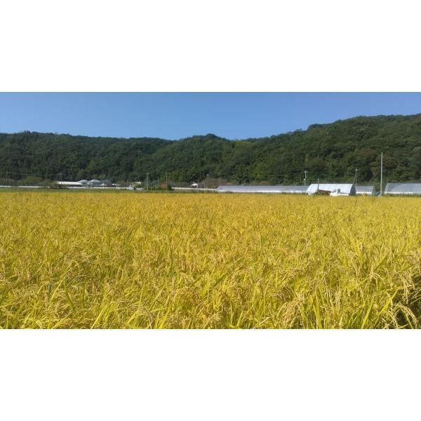 【低温熟成】平成30年度産 鳥取県産 ハーブ米 ミルキークイーン 精米5kg|nakazaki-farm|04