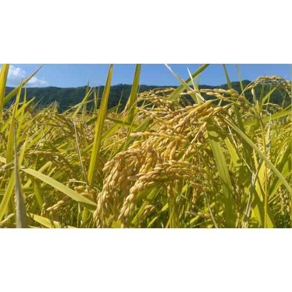 【低温熟成】平成30年度産 鳥取県産 ハーブ米 ミルキークイーン 精米5kg|nakazaki-farm|05
