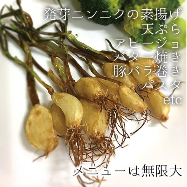 スプラウトにんにく 水耕栽培キット 2個セット 発芽ニンニク 栽培セット|namustore|11