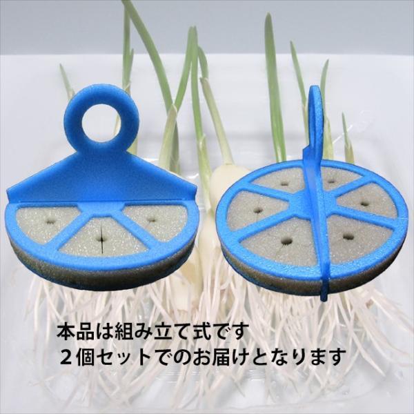 スプラウトにんにく 水耕栽培キット 2個セット 発芽ニンニク 栽培セット|namustore|03
