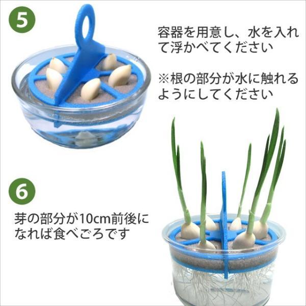 スプラウトにんにく 水耕栽培キット 2個セット 発芽ニンニク 栽培セット|namustore|05