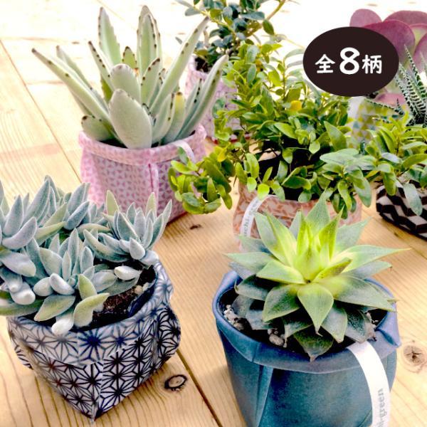 おしゃれな鉢カバー ガーデニング  プチギフト uchi-green 全8柄|namustore