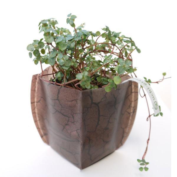鉢カバー ガーデニング 園芸グッズ uchi-green 大地 namustore