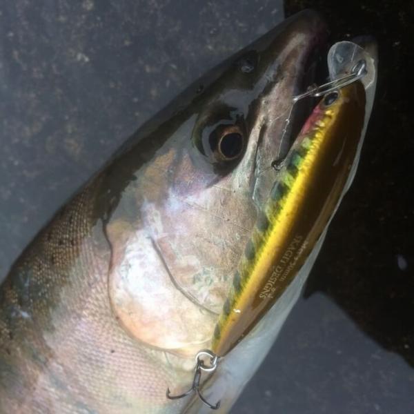 スカジットデザインズ ハードルアー メッツ mets 40mm FastSinking 3.2g SKAGIT DESIGNS ミノー 渓流の定番ミノー|native-fish-dreams|09