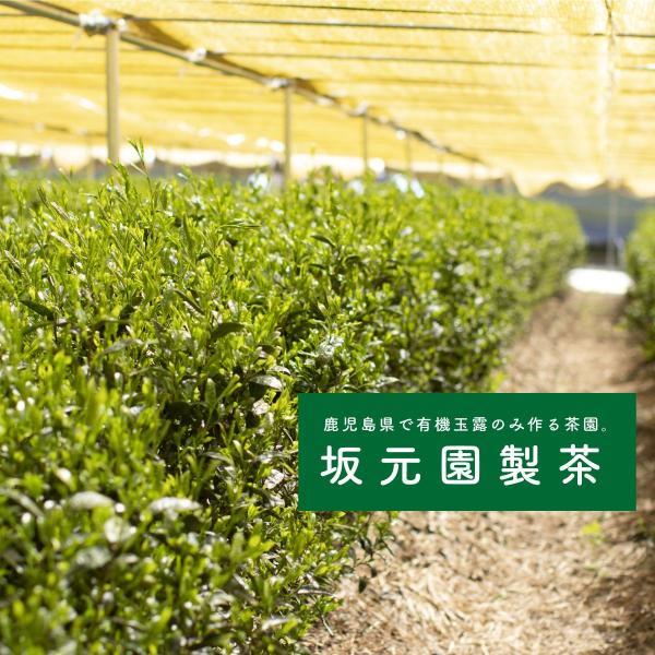 玉露 粉末 緑茶 日本茶 80g 国産 鹿児島県産 オーガニック 有機栽培|naturalhills|04