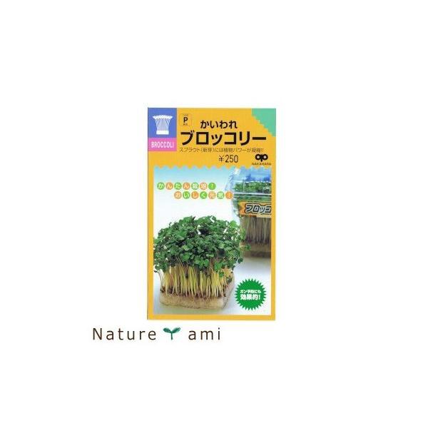 【種】 ブロッコリースプラウト 種 40ml 1袋 (配送料90円)|nature-ami
