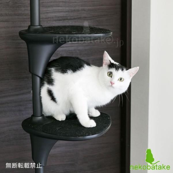 OPPO CatForest [キャットフォレスト] ブラック / 猫用タワー テラモト(取寄せ)|nekobatake|02