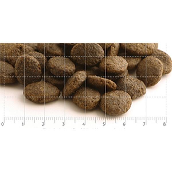 最短賞味2021.3.13・フィッシュ4ドッグ サーモン 大粒 12kg 成犬シニア犬用グレインフリー ドッグフードFISH4DOGS正規品 f4d20395|nekokin|02