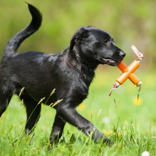 メジャードッグ Dog X(ドッグエックス) 天然ゴム製 犬用おもちゃ MAJOR DOG nekokin 02