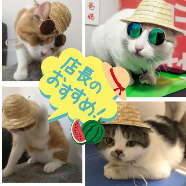 猫雑貨 ペット用品 猫専用! 麦わら帽子|nekote-shop|03