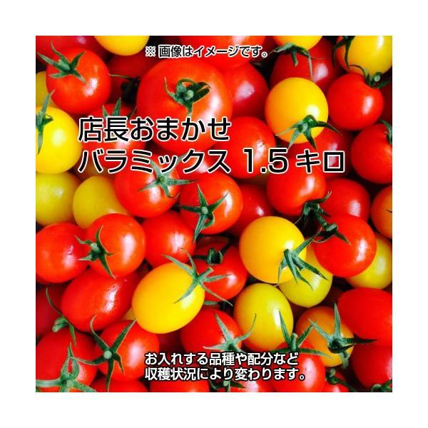 ミニトマト トマト 新鮮 生産者直送 当店一番人気!数種類のミニトマトが入った店長おまかせバラミックス1.5キロ |next-triange