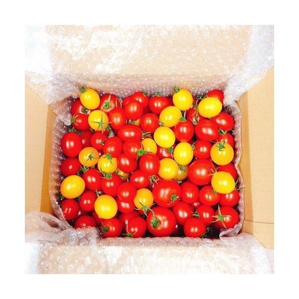 ミニトマト トマト 新鮮 生産者直送 当店一番人気!数種類のミニトマトが入った店長おまかせバラミックス1.5キロ |next-triange|02