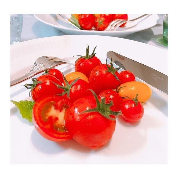 ミニトマト トマト 新鮮 生産者直送 当店一番人気!数種類のミニトマトが入った店長おまかせバラミックス1.5キロ |next-triange|06