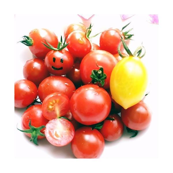 トマト ミニトマト 新鮮 生産者直送 赤と黄色のミニトマトが楽しめる10カップセット |next-triange|06