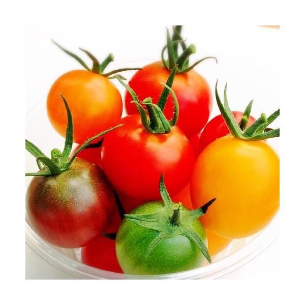 トマト ミニトマト 新鮮 生産者直送 カラフルトマトが入ったジュエリーボックスカップ入り8カップセット |next-triange|07